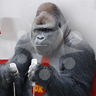 See Shabani Endorse Nike, Nespresso, Calvin Klein and Other Big Brands