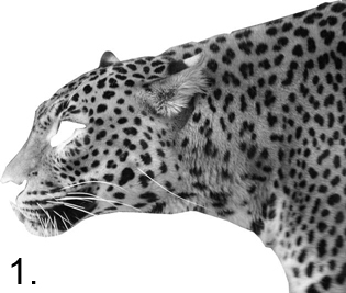 Create a cyborgenic leopard Photoshop tutorial